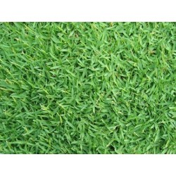 SEEDS GRAMIGNONE FOR LAWN CARPET GRASS KG. 5