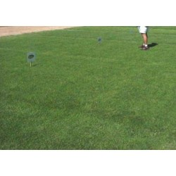 THE SEEDS OF LAWN WEEDS KG. 10 CYNODON DACTYLON