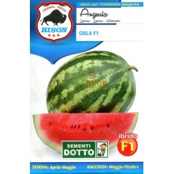 BISON SEEDS OF WATERMELON OBLA F1 HYBRID