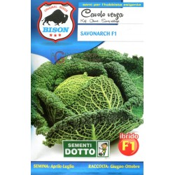 BISON SEEDS OF CABBAGE SAVONARCH F1 HYBRID