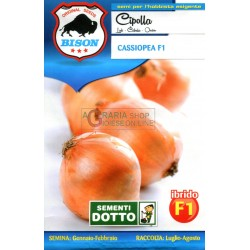 BISON SEEDS OF ONION CASSIOPEA F1 HYBRID
