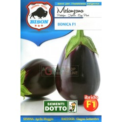 BISON SEEDS OF AUBERGINE BONICA F1 HYBRID