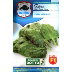 BISON SEEDS SPINACH EARLY HIBRID N7 F1