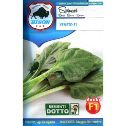 BISON SEEDS OF SPINACH VENETO F1 HYBRID
