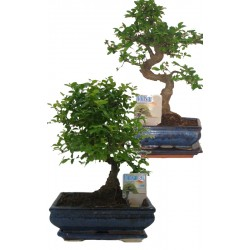 BONSAI MIX VASE CM. 15