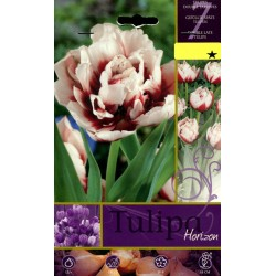 BULBS OF FLOWER TULIPA HORIZON No. 7
