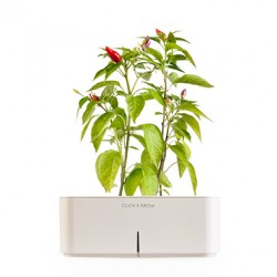 CLICK AND GROW STARTER KIT WITH CHILI PEPPER
