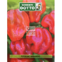 DUCT ENVELOPES THE SEEDS OF PEPPER HABANERO
