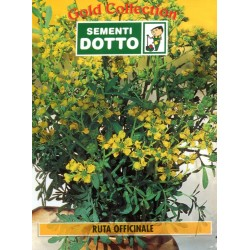 DOTTO BUSTE SEMI DI RUTA OFFICINALE