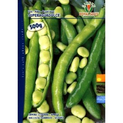 FAVA KG. 1 SUPERAGUADULCE ROYAL SEED